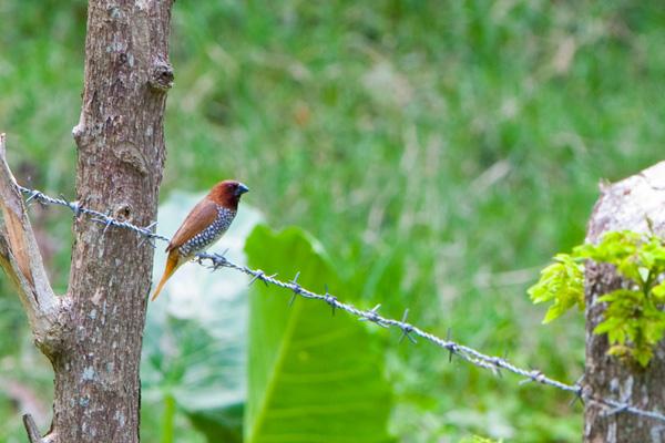 Cazando las aves, por vía de la lente de cámara